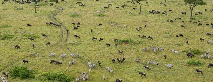 maasai-mara-game-reserve-from-nairobi