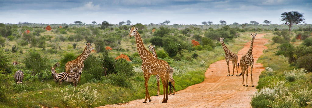 tsavo-national-park-kenya-safaris
