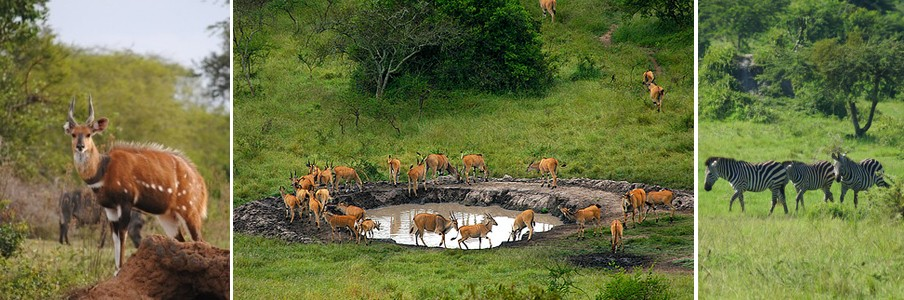 lake-mburo-game-tour