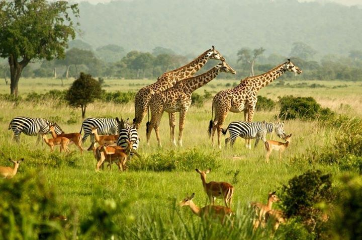 murchison-wildlife-safaris