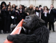 Uganda mountain gorilla in London