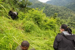 4 days Uganda gorilla safari Bwindi and Queen Elizabeth National Park wildlife tour