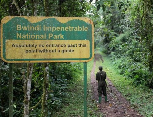 Hiking as an alternative safari activity in Bwindi -Uganda safari news