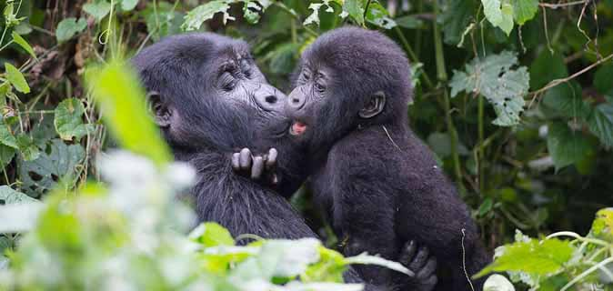Attractions in Bwindi impenetrable Park