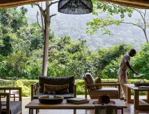 Sanctuary Gorilla Forest Camp- Share  the Best Grand Experience