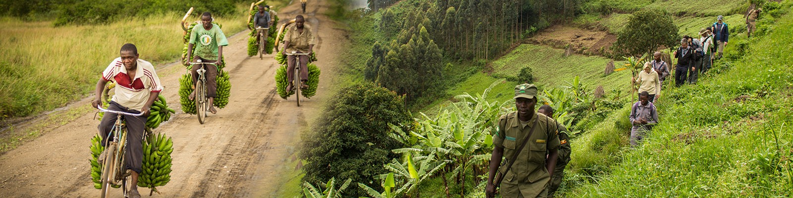 bwindi-impenetrable-forest-national-park-tours