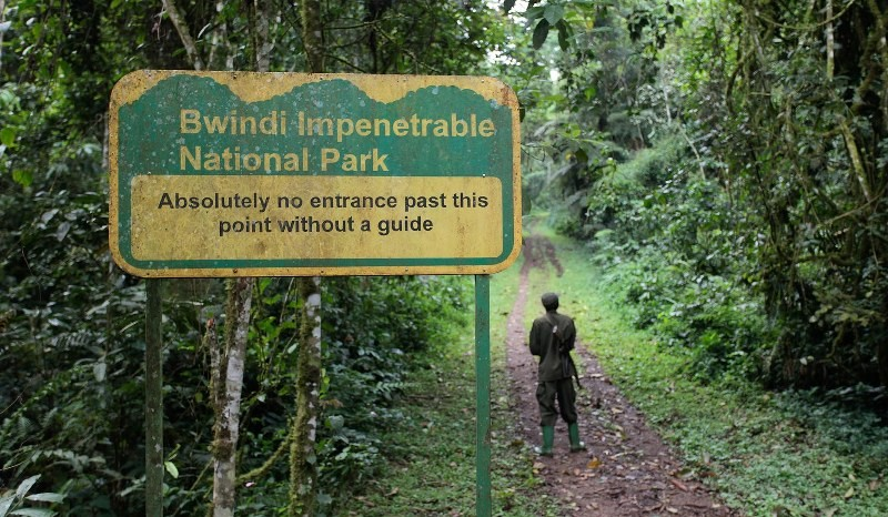 Nature Walks in Bwindi Impenetrable National Park