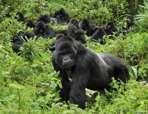 Gorilla trekking sectors of Bwindi Impenetrable National Park-Uganda Safari News