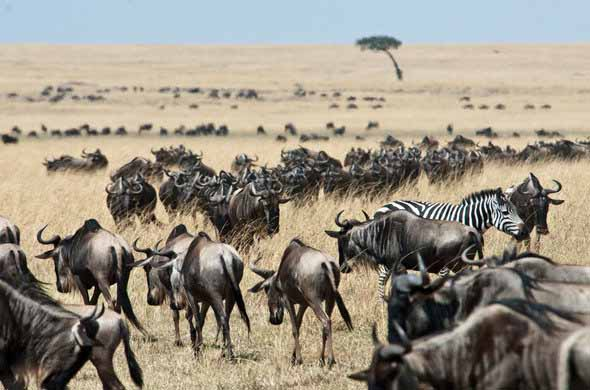 Tanzania Safari Holiday Tour